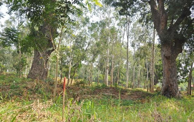 Cận cảnh cây xanh ở công viên Gia Định sắp bị đốn hạ - ảnh 8