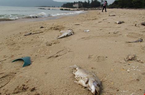 Chỉ đạo của Thủ tướng Nguyễn Xuân Phúc về vụ cá chết bất thường - ảnh 1