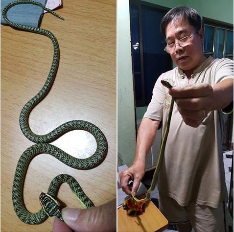 Phát hoảng vì rắn bò vào phòng ngủ ở TP.HCM  - ảnh 1