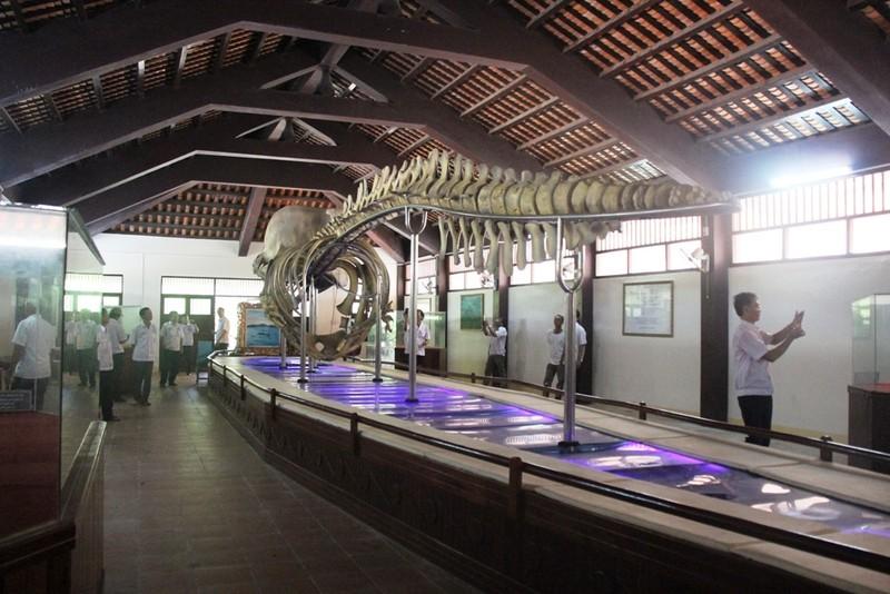 Ngắm bộ xương cá voi khủng trên đảo Phú Quý - ảnh 5