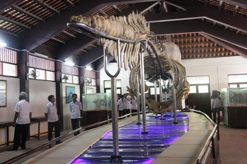Ngắm bộ xương cá voi khủng trên đảo Phú Quý - ảnh 4