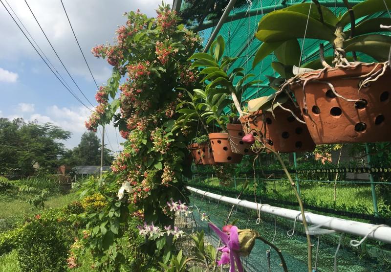 Ngắm khu vườn Đà Lạt trong khuôn viên trường Đại học ở Sài Gòn - ảnh 2