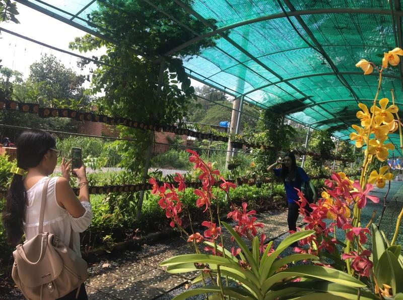 Ngắm khu vườn Đà Lạt trong khuôn viên trường Đại học ở Sài Gòn - ảnh 3