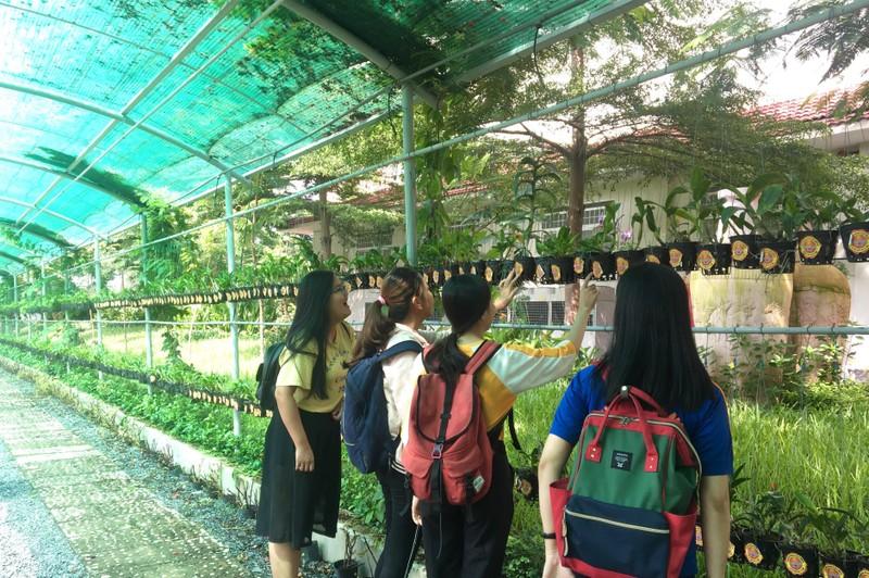 Ngắm khu vườn Đà Lạt trong khuôn viên trường Đại học ở Sài Gòn - ảnh 4