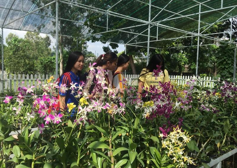 Ngắm khu vườn Đà Lạt trong khuôn viên trường Đại học ở Sài Gòn - ảnh 5