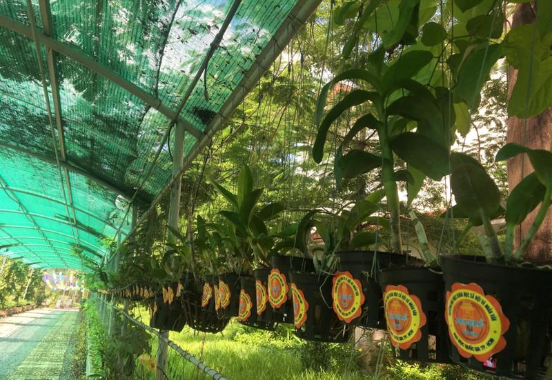 Ngắm khu vườn Đà Lạt trong khuôn viên trường Đại học ở Sài Gòn - ảnh 9