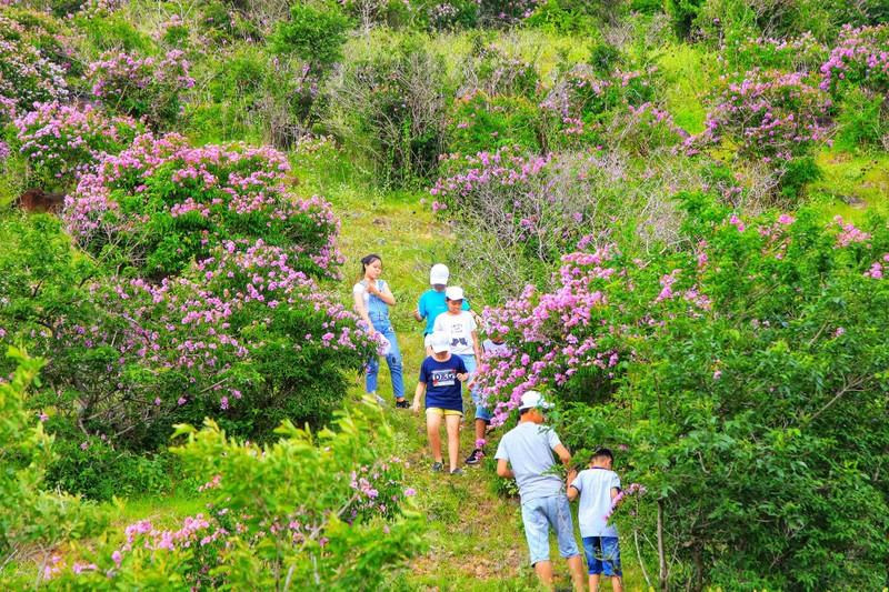 Núi Tàu khô khát quanh năm, mùa hạ về bỗng bừng lên sắc tím - ảnh 6