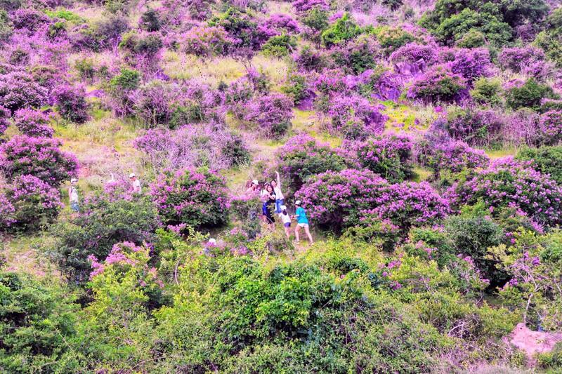 Núi Tàu khô khát quanh năm, mùa hạ về bỗng bừng lên sắc tím - ảnh 5