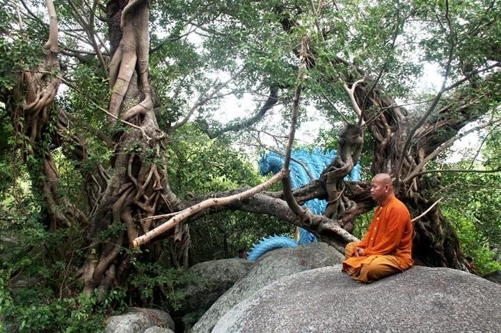 Công nhận thêm 5 cây di sản tại Khánh Hòa - ảnh 3