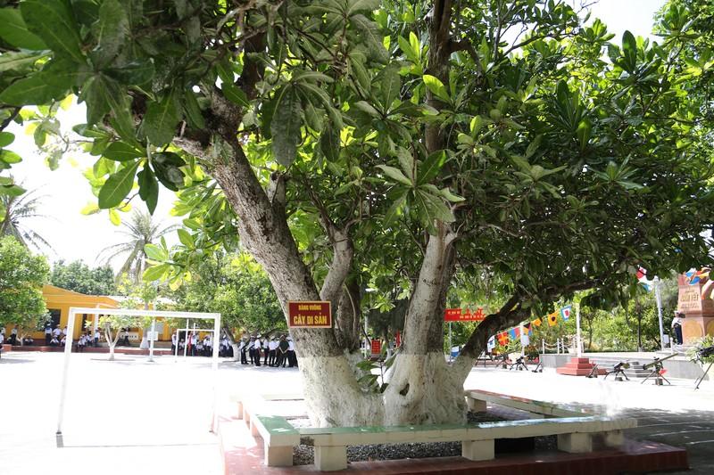 Trao bằng công nhận 4 cây di sản ở Trường Sa - ảnh 2