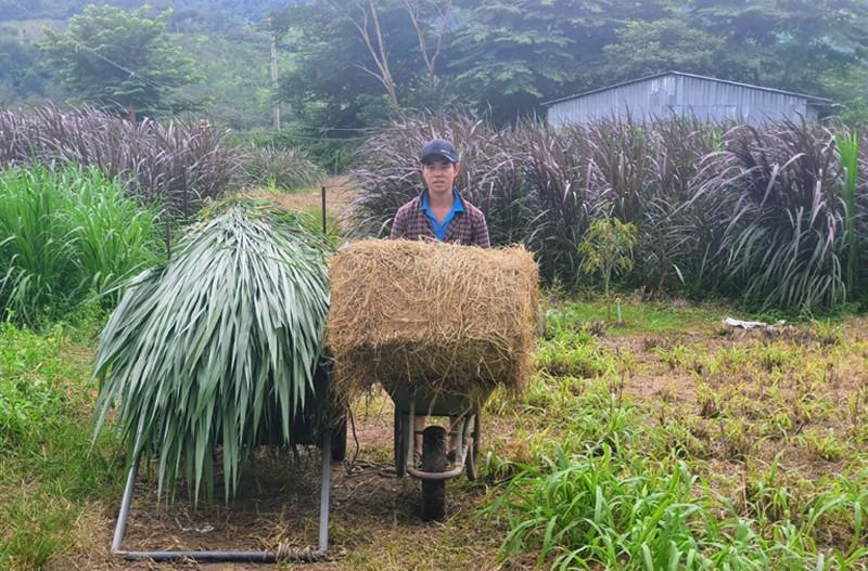 Khi đàn bò tót lai ở Ninh Thuận được đổi chủ  - ảnh 6