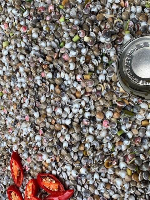 Hè về với biển, món ốc lể cũng theo về  - ảnh 1