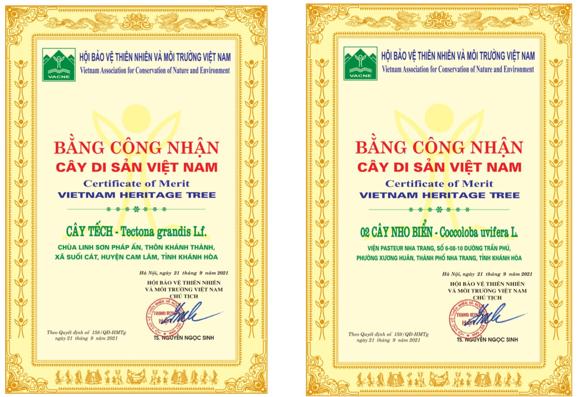 Công nhận hai cây tra ở Viện Pasteur Nha Trang là cây di sản - ảnh 1