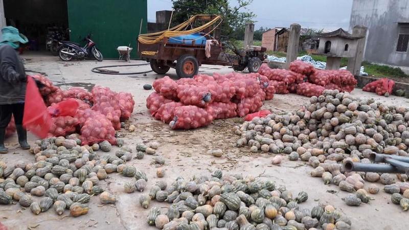 Sài Gòn 'giải cứu' 10 tấn bí đỏ giúp người dân Đăk Lăk - ảnh 2