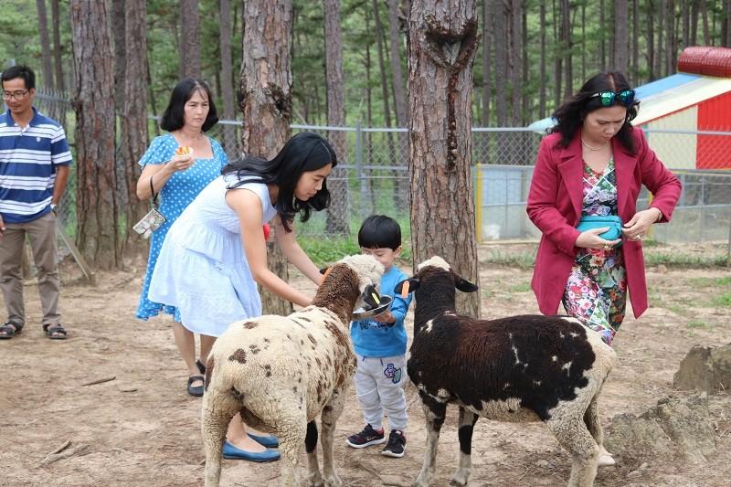 Check in Đà Lạt,  ghé Zoo Doo chơi cùng kangaroo      - ảnh 13