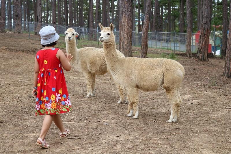 Check in Đà Lạt,  ghé Zoo Doo chơi cùng kangaroo      - ảnh 14