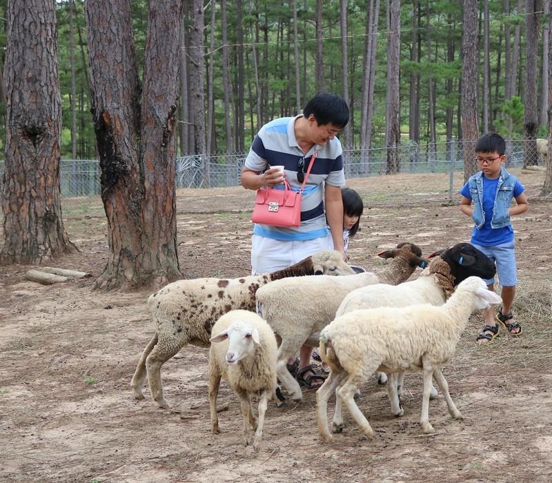 Check in Đà Lạt,  ghé Zoo Doo chơi cùng kangaroo      - ảnh 15