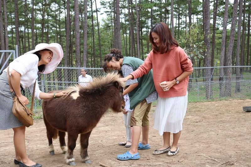 Check in Đà Lạt,  ghé Zoo Doo chơi cùng kangaroo      - ảnh 16