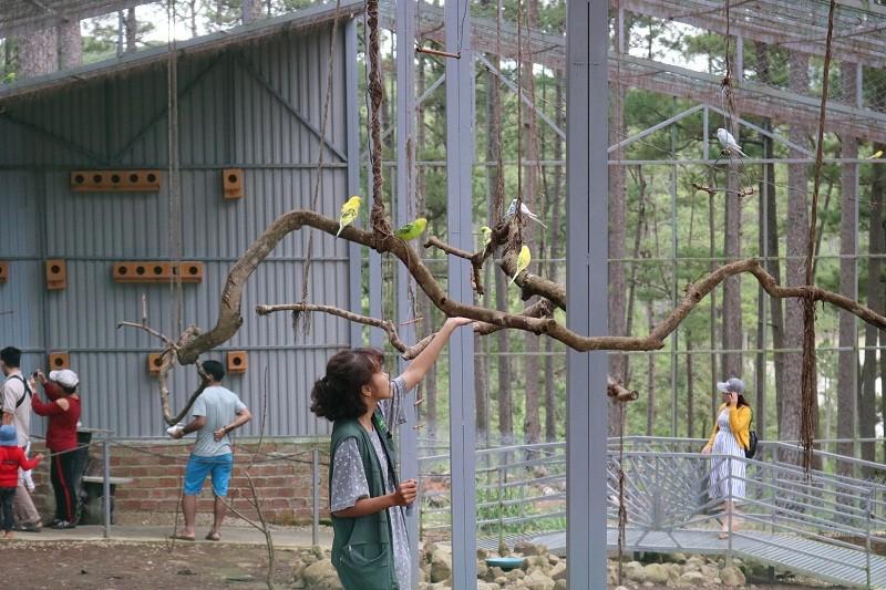 Check in Đà Lạt,  ghé Zoo Doo chơi cùng kangaroo      - ảnh 20