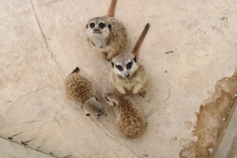 Check in Đà Lạt,  ghé Zoo Doo chơi cùng kangaroo      - ảnh 18
