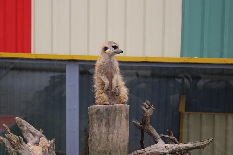 Check in Đà Lạt,  ghé Zoo Doo chơi cùng kangaroo      - ảnh 19