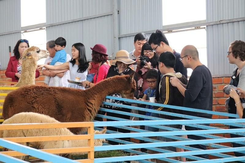 Check in Đà Lạt,  ghé Zoo Doo chơi cùng kangaroo      - ảnh 2