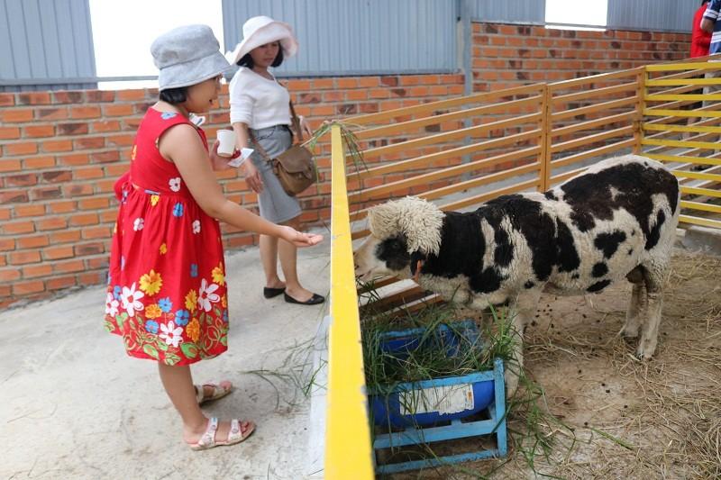 Check in Đà Lạt,  ghé Zoo Doo chơi cùng kangaroo      - ảnh 3