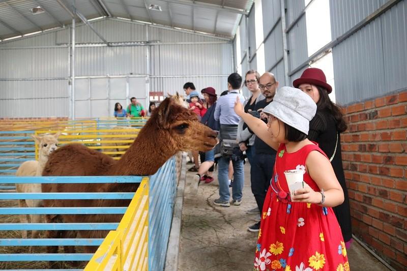 Check in Đà Lạt,  ghé Zoo Doo chơi cùng kangaroo      - ảnh 4
