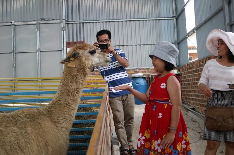 Check in Đà Lạt,  ghé Zoo Doo chơi cùng kangaroo      - ảnh 6