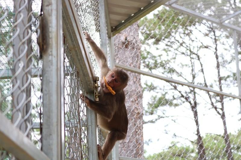 Check in Đà Lạt,  ghé Zoo Doo chơi cùng kangaroo      - ảnh 10