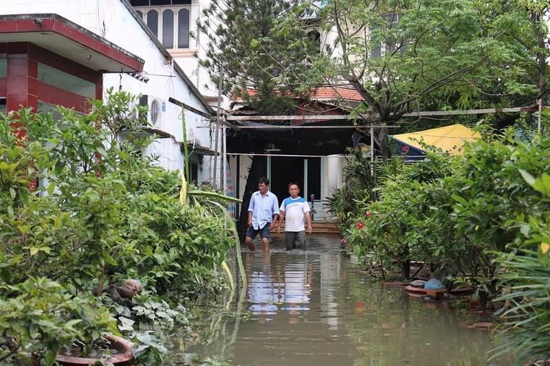 Vườn mai Thủ Đức ngập nặng sau bão số 9 - ảnh 5