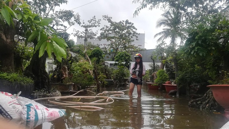Vườn mai Thủ Đức ngập nặng sau bão số 9 - ảnh 6