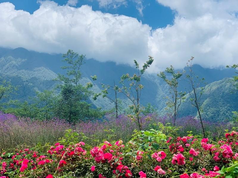 Mê mẩn với thung lũng hoa hồng lớn nhất Việt Nam - ảnh 1
