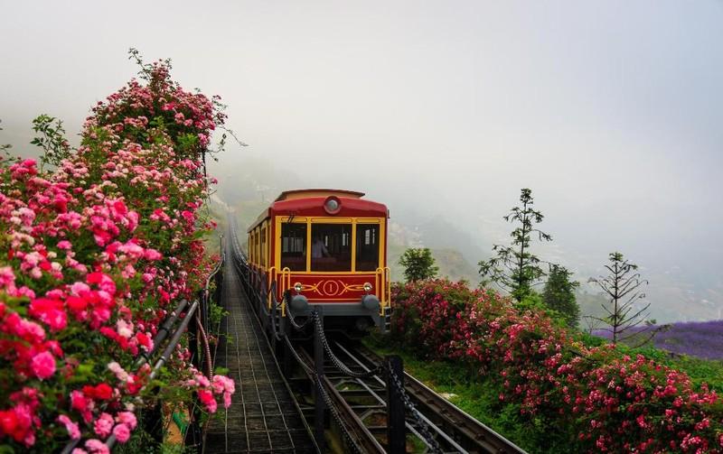 Mê mẩn với thung lũng hoa hồng lớn nhất Việt Nam - ảnh 6