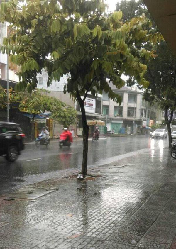 TP.HCM, Bình Dương… hứng cơn mưa 'vàng' - ảnh 3