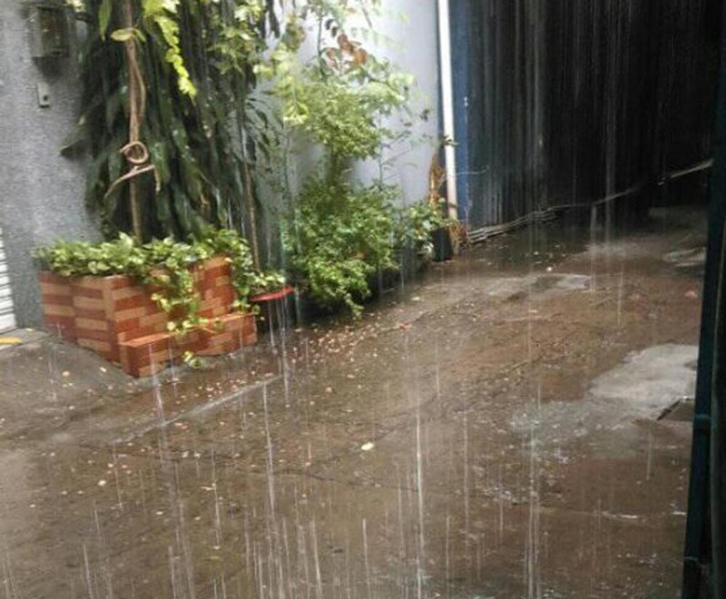 TP.HCM, Bình Dương… hứng cơn mưa 'vàng' - ảnh 4