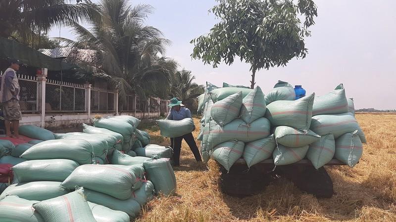 'Cấm xuất khẩu gạo, thiệt hại đầu tiên là người dân' - ảnh 1