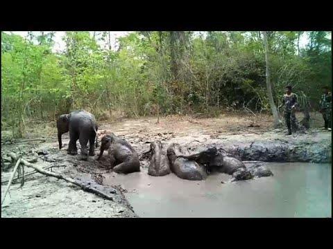 Thái Lan: Giải cứu 6 chú voi con bị mắc kẹt - ảnh 2