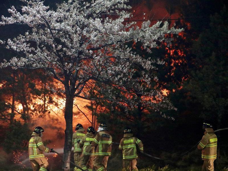 Cháy rừng dữ dội, Hàn Quốc ban bố tình trạng khẩn cấp - ảnh 2