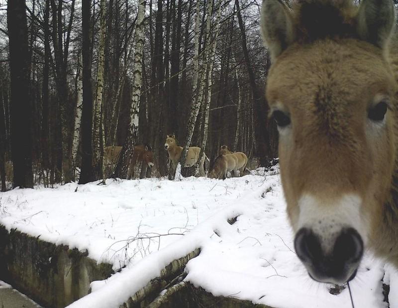 Phát hiện mới về hiệu ứng thảm họa hạt nhân Chernobyl - ảnh 2