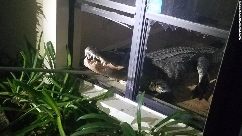 Kinh hoàng cá sấu đột nhập nhà bà cụ 77 tuổi - ảnh 1