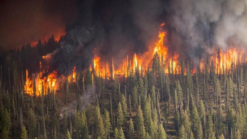 Thấy gì từ vụ cháy rừng kinh hoàng ở Nga? - ảnh 1