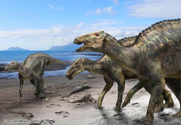 Phát hiện loài khủng long mới ở Nhật Bản - ảnh 2