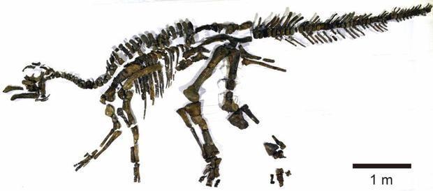 Phát hiện loài khủng long mới ở Nhật Bản - ảnh 1