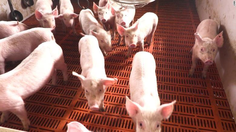 Trung Quốc xuất 10.000 tấn thịt lợn từ nguồn dự trữ quốc gia - ảnh 1