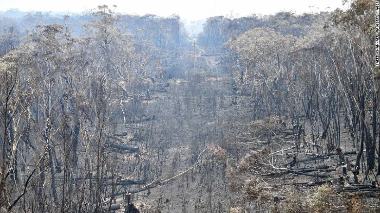 Nóng kỷ lục, Úc tuyên bố tình trạng khẩn cấp - ảnh 2