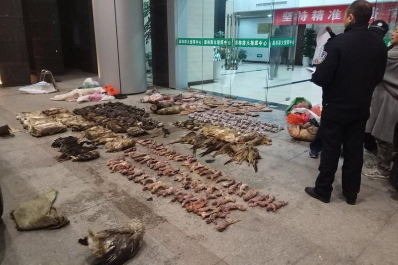 Trung Quốc siết buôn bán động vật hoang dã, ngăn virus Corona - ảnh 1