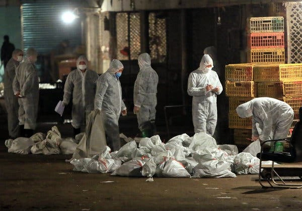 Trung Quốc phát hiện ổ dịch cúm A/H5N1 gần Vũ Hán - ảnh 1