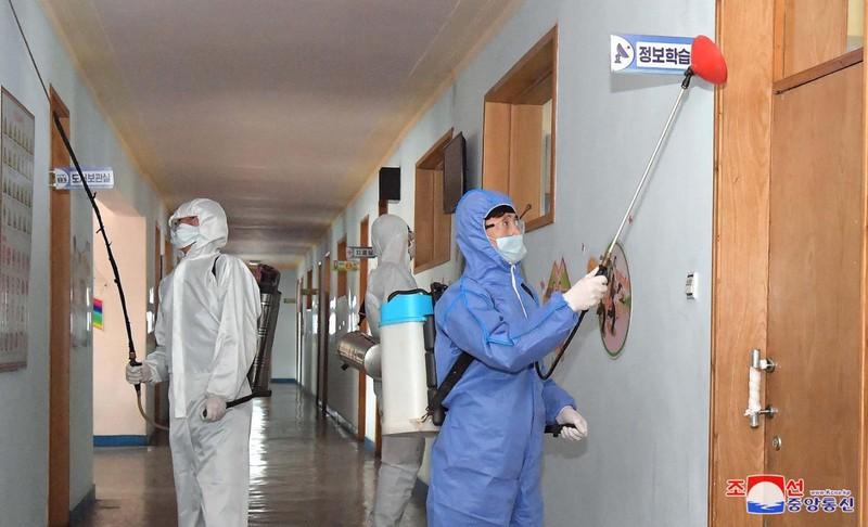 WHO công bố thông tin về tình hình dịch COVID-19 ở Triều Tiên  - ảnh 1