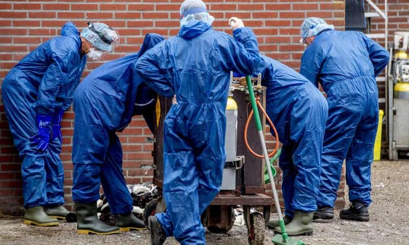 Chồn nhiễm COVID-19 ở Hà Lan và Tây Ban Nha - ảnh 1